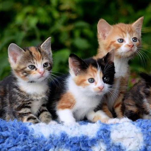 Kitten Food Collection